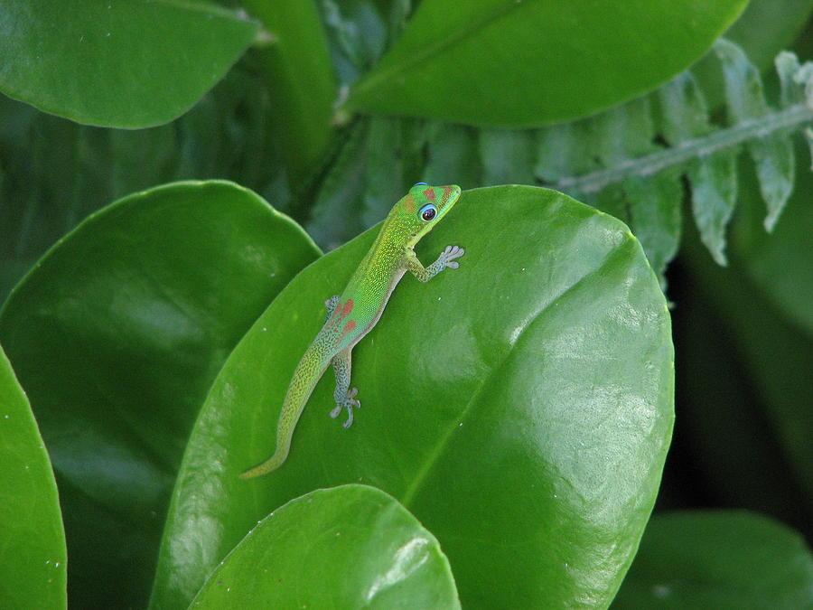 Green Photograph - Green Lizard by Mary Christian Stewart