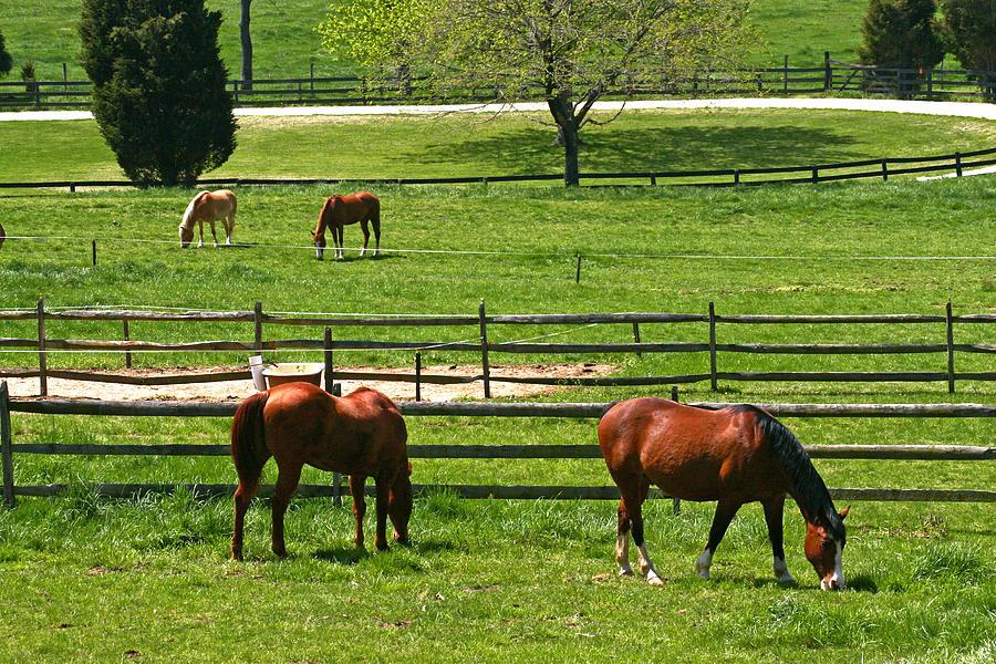 Horses Photograph - Green Meadows by John Holloway