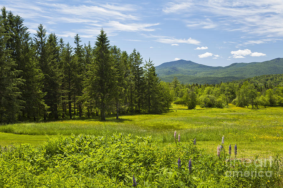 Spring Photograph - Green Mountain Meadow by Alan L Graham
