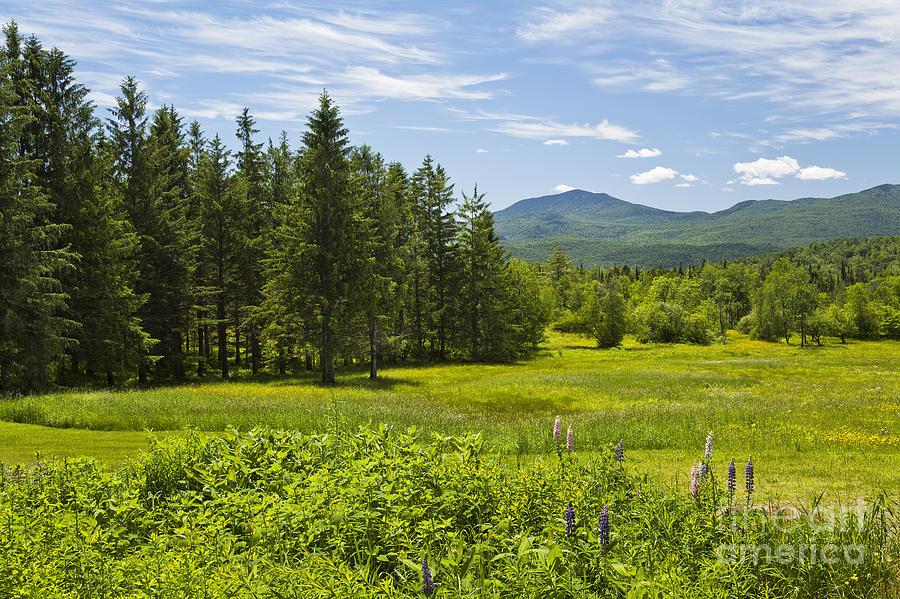 Green Mountain Meadow Photograph