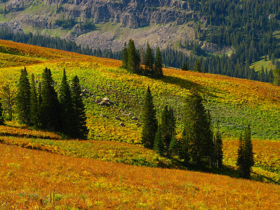 Green Mountain Trail Photograph - Green Mountain Trail by Raymond Salani III