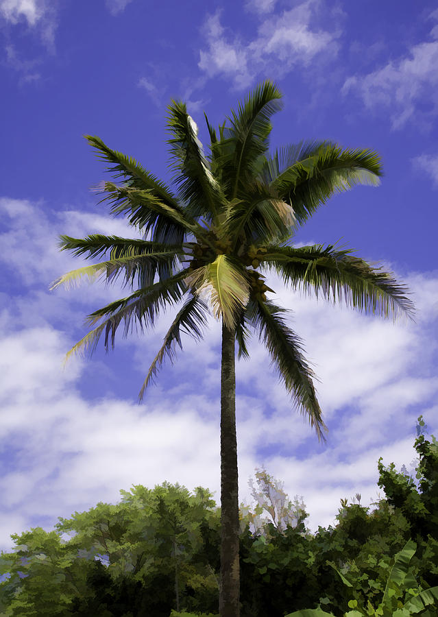Palm Tree Photograph - Green On Blue by Joanna Madloch