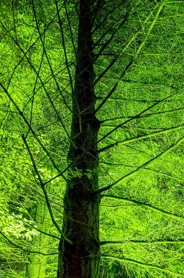 2012 Photograph - Green On Green by Ross G Strachan