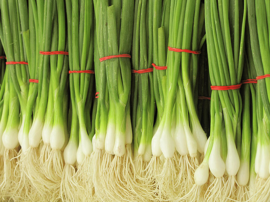 Green Onions Photograph by Francois Dion