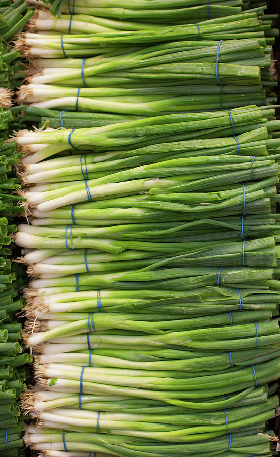 Green Onions Photograph by Tuan Tran