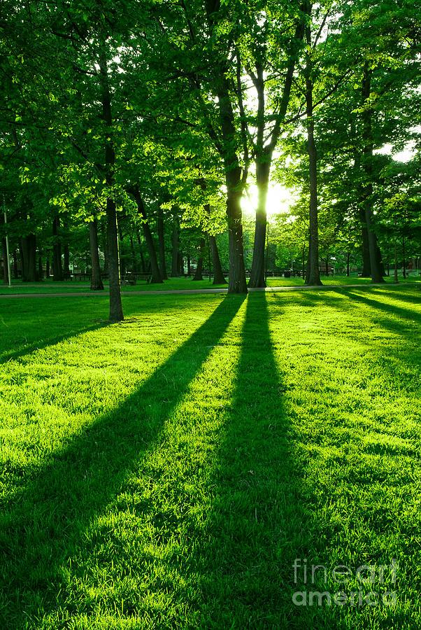 Park Photograph - Green park with setting sun by Elena Elisseeva