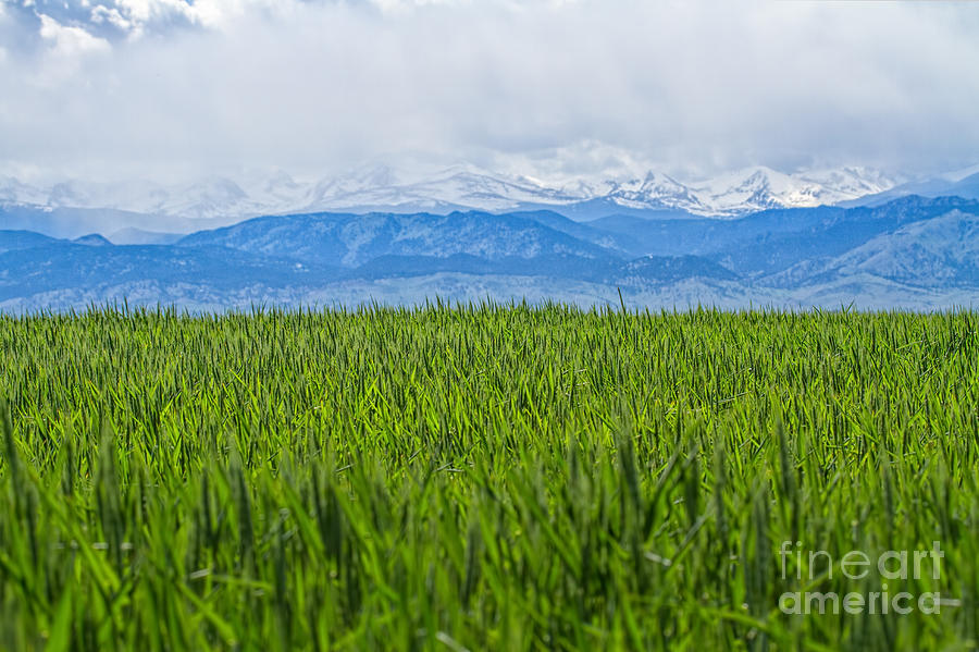 Pasture Photograph - Green Pastures by Jim Garrison