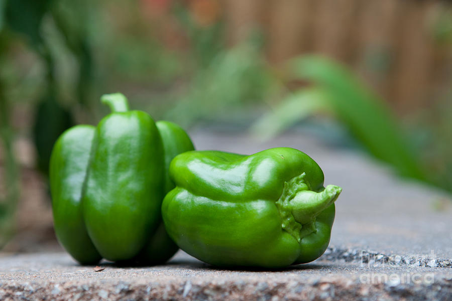 Food Photograph - Green Peppers by Kay Pickens
