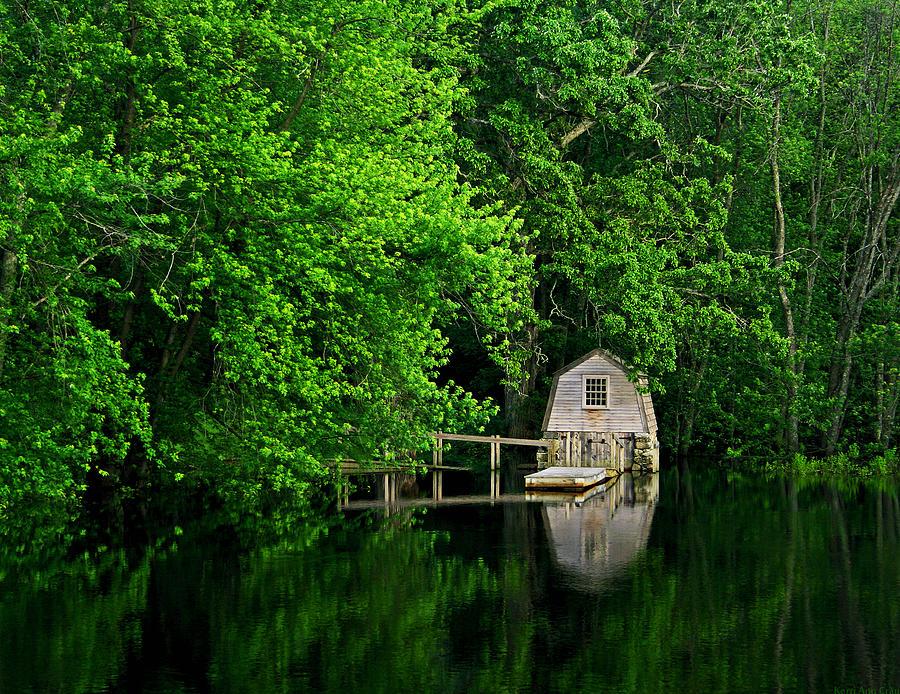 Green Photograph - Green Reflections by Kerri Ann Crau