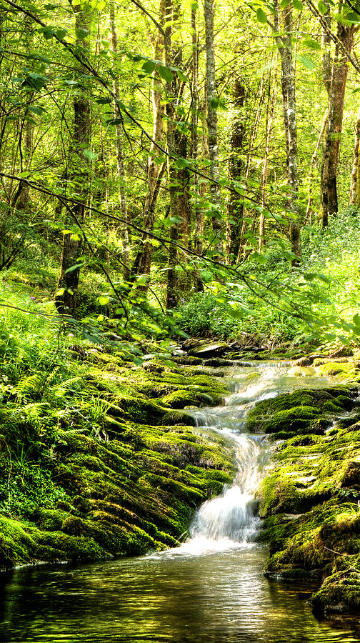 Forest Photograph - Green River No2 by Weston Westmoreland