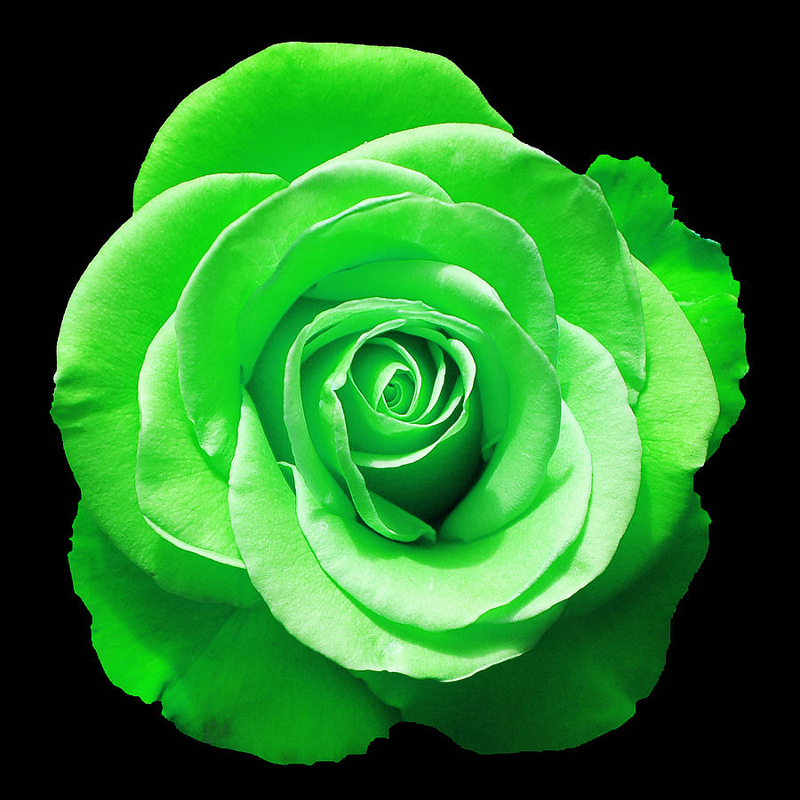Green Rose Photograph by Aimee L Maher ALM GALLERY