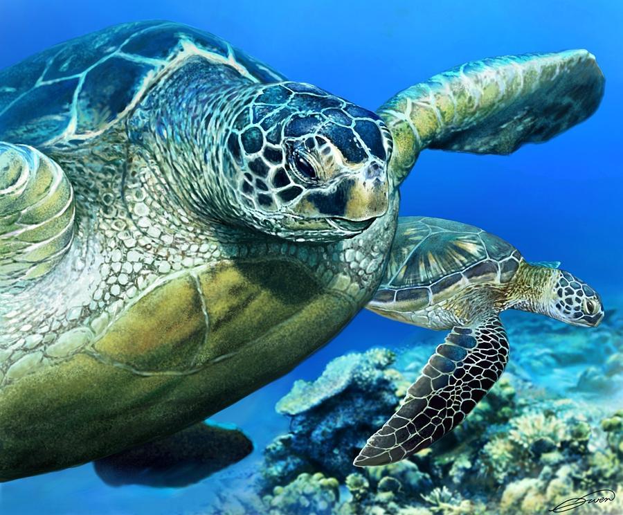Green Sea Turtle Digital Art - Green Sea Turtle by Owen Bell
