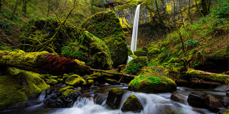 Pacific Photograph - Green Seasons by Chad Dutson