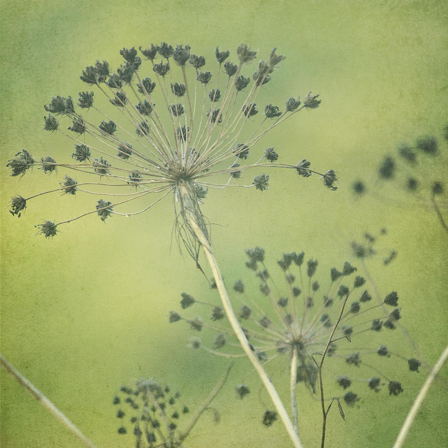 Autumn Photograph - Green Seeds by Rani Meenagh