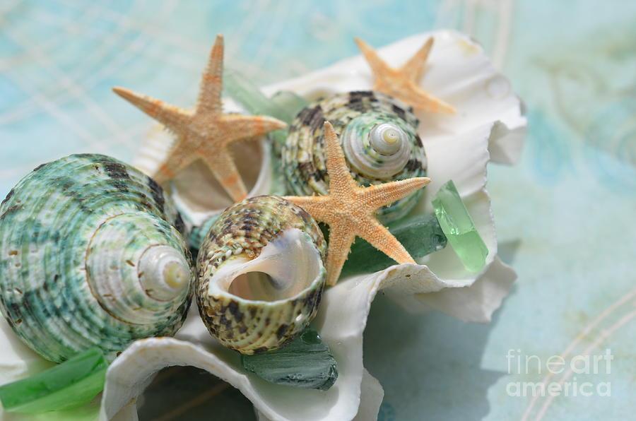 Green Shells Photograph - Green Shells And Sea Glass by Carol McGunagle