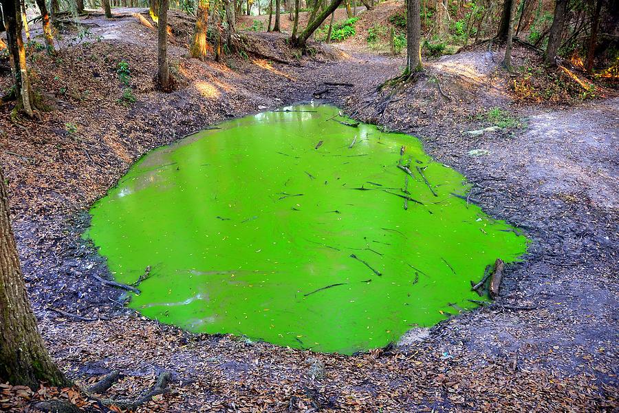 Algae Photograph - Green Spill by David Lee Thompson