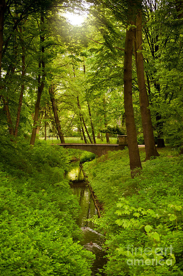 Green spring trees and bridge by Arletta Cwalina