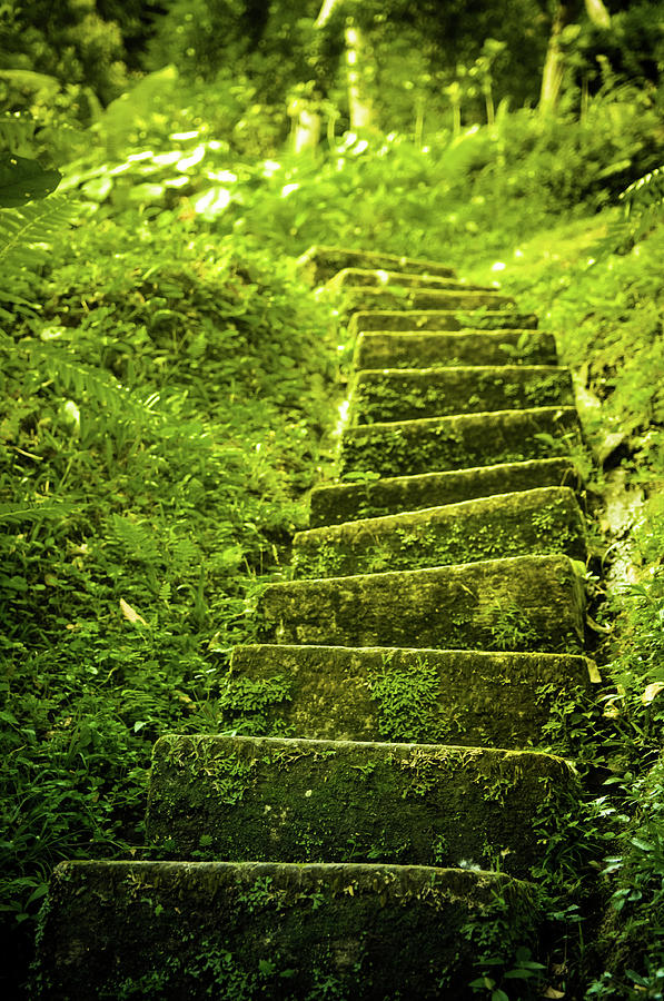 Green Stair Photograph by Pixalot