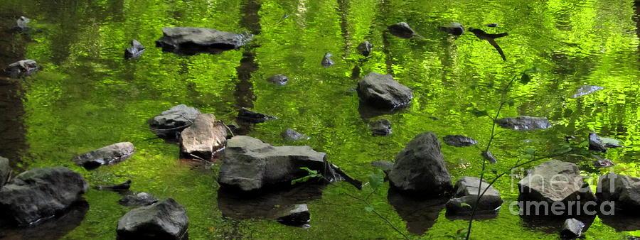 Green Stream Photograph by Joshua Bales