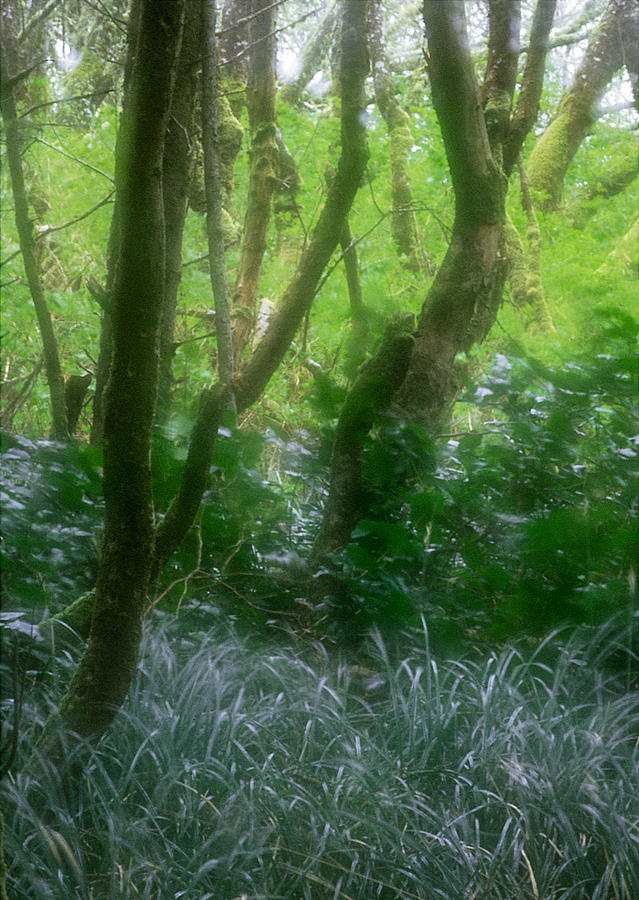 Green Photograph - Green Study by Kim Lessel