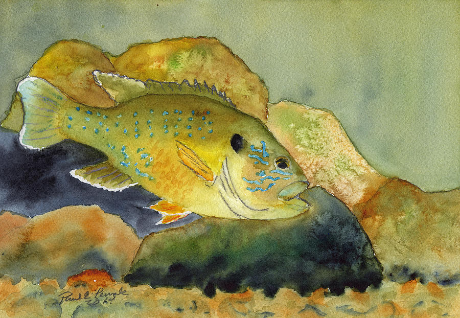 Sunfish Painting - Green Sunfish by Paul Temple