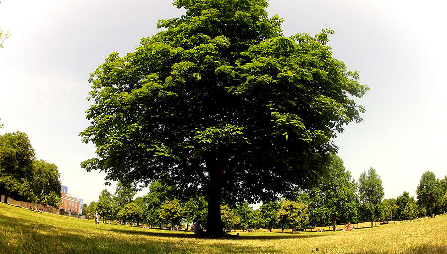 Green Photograph - Green Tree by Stephen Richards