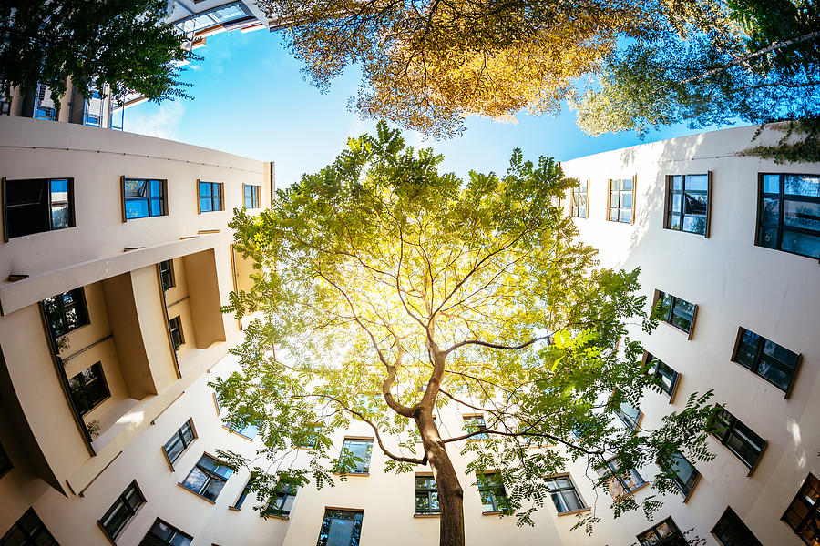 Green Tree Surounded by Residential Houses Photograph by TommL