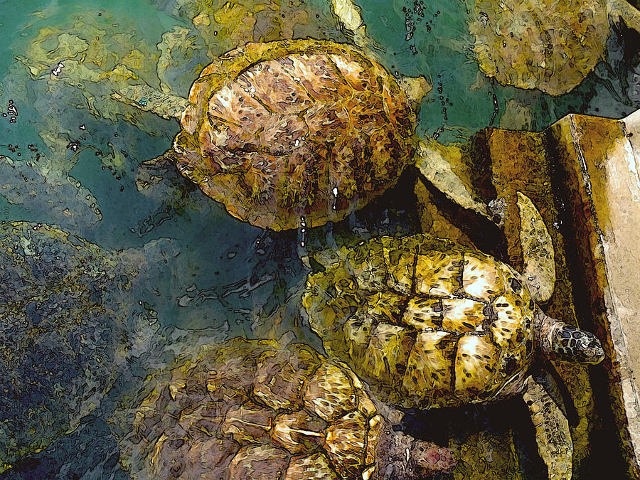 Green Turtles Photograph