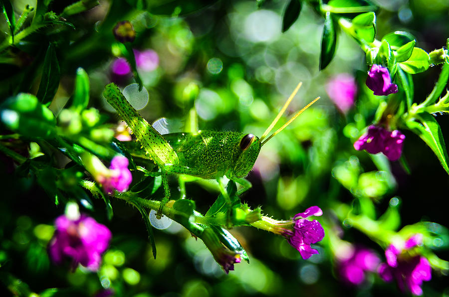 Central America Photograph - Green Visitor In The False Heather by Brian Xavier