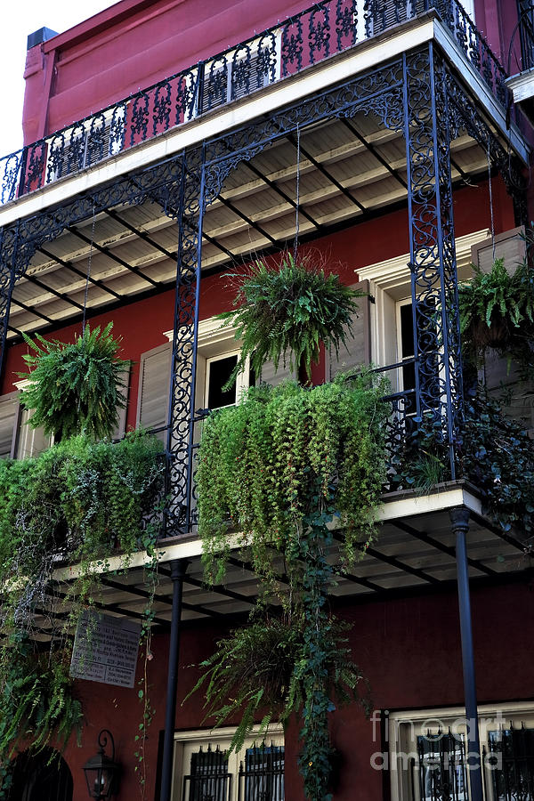 Plants Photograph - Greens In New Orleans by John Rizzuto
