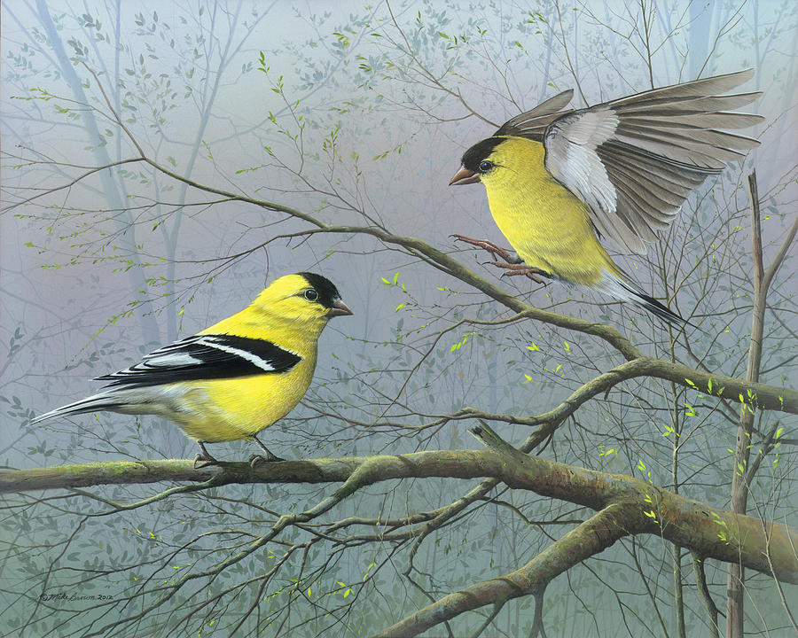 American Goldfinch Painting - Greetings My Friend by Mike Brown