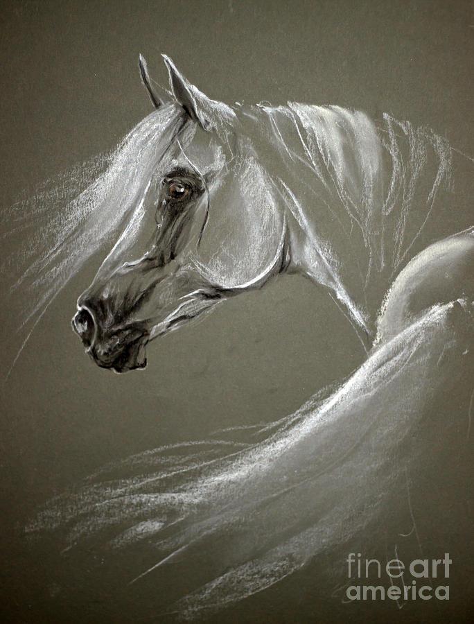 Grey Arabian Horse Pastel By Angel Tarantella