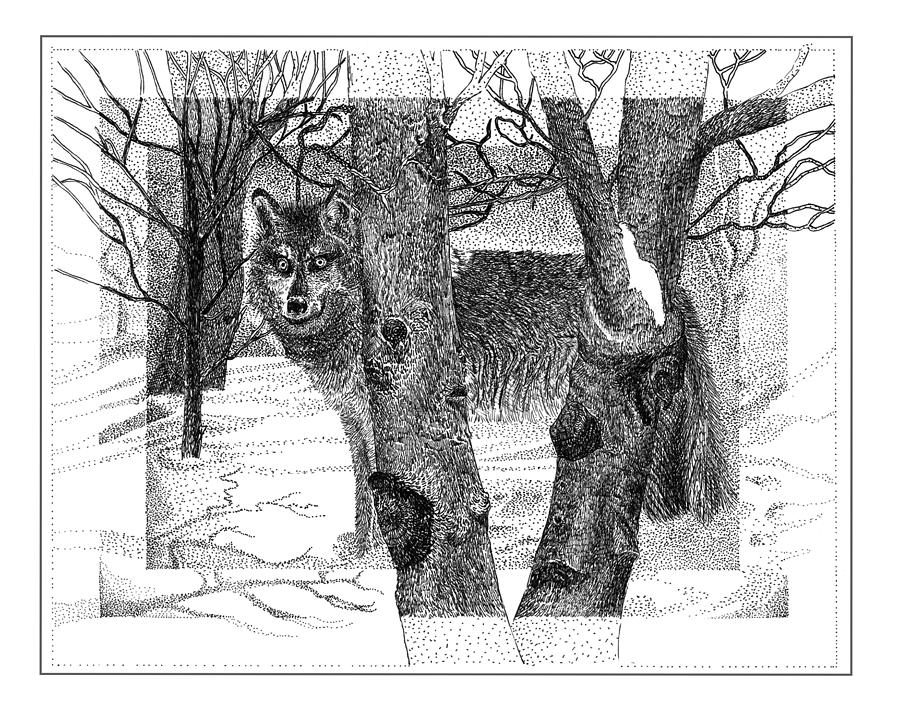Mexican Grey Wolf In Winter Drawing