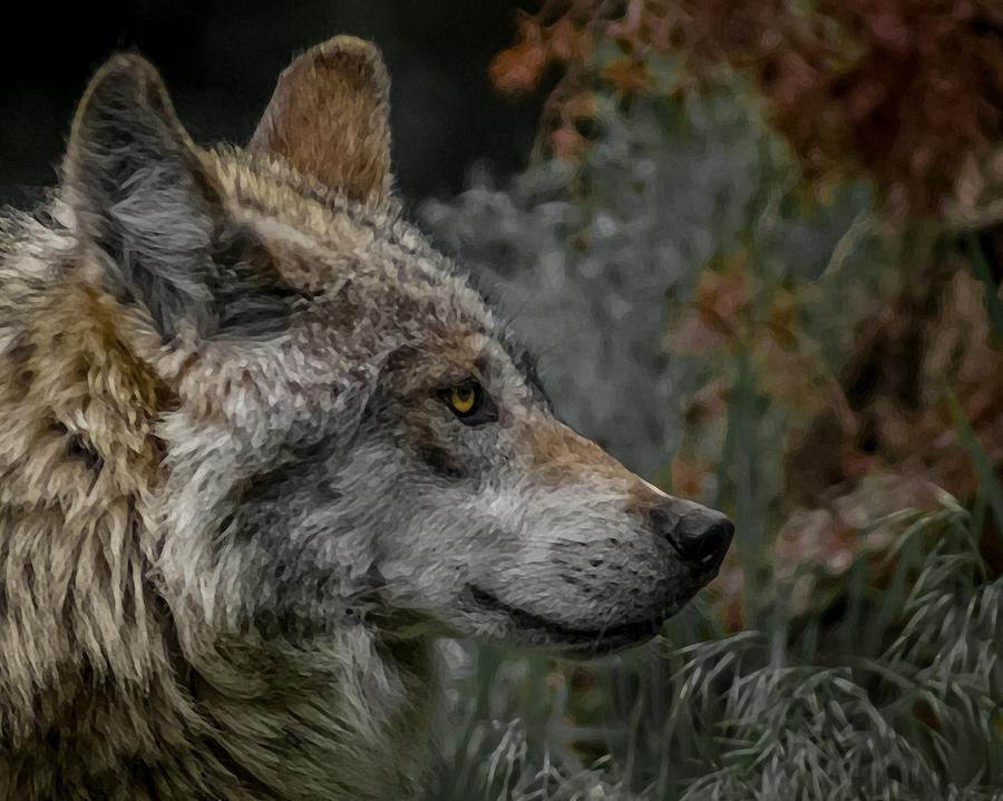 Wolf Digital Art - Grey Wolf Profile 3 by Ernie Echols