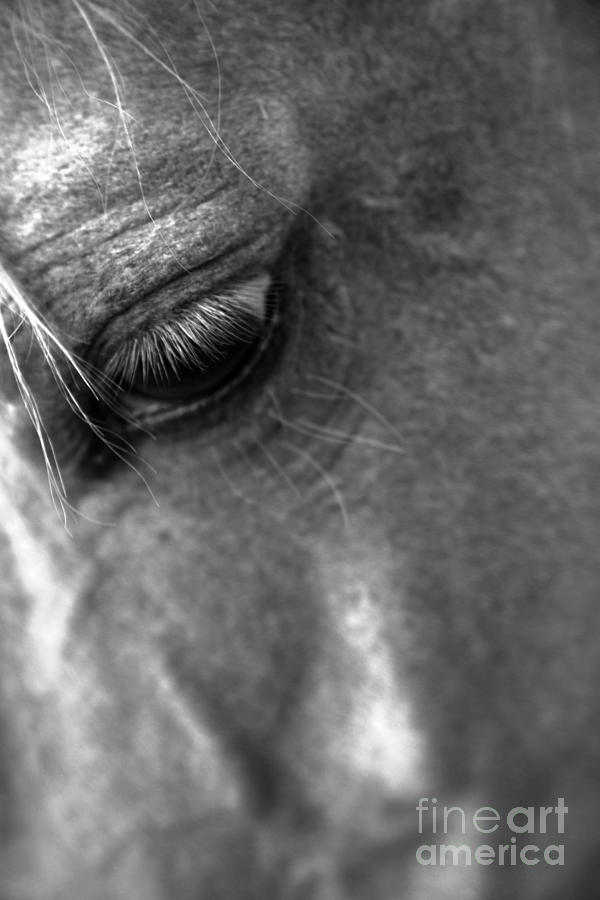 All Rights Reserved Photograph - Grief by Heather Roper