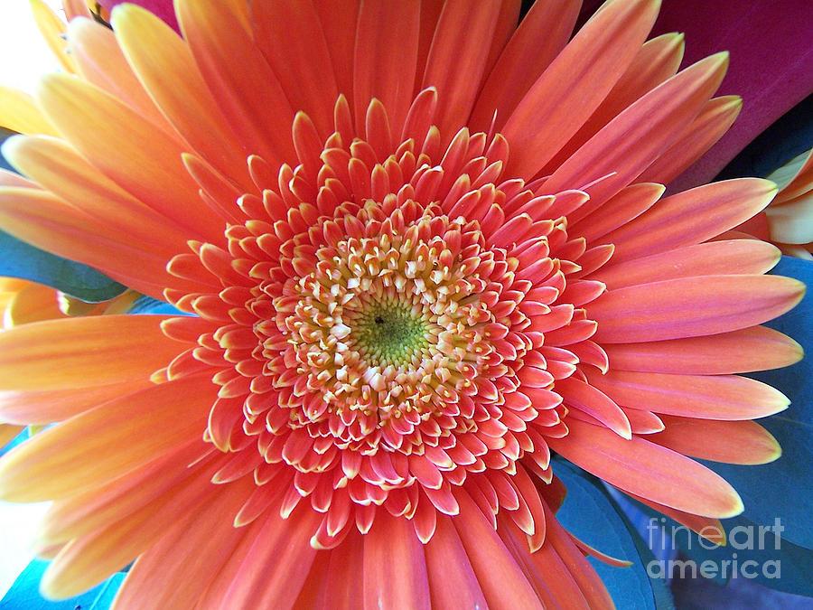 Flower Digital Art - Groovy Gorgeous Gerber by Margie Chapman
