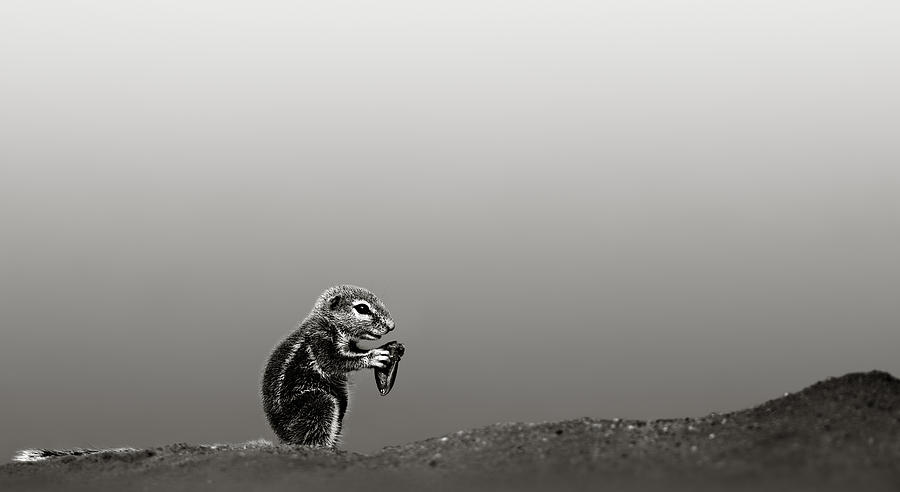 Ground Squirrel Photograph by Johan Swanepoel