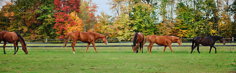 Equine Photograph - Group Activity by Kristi Swift