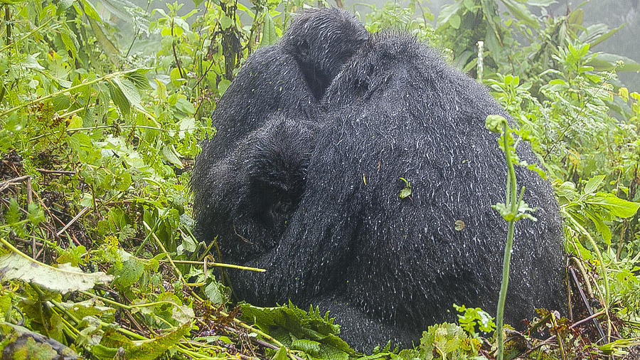 Rwanda Photograph - Group Hug by Paul Weaver