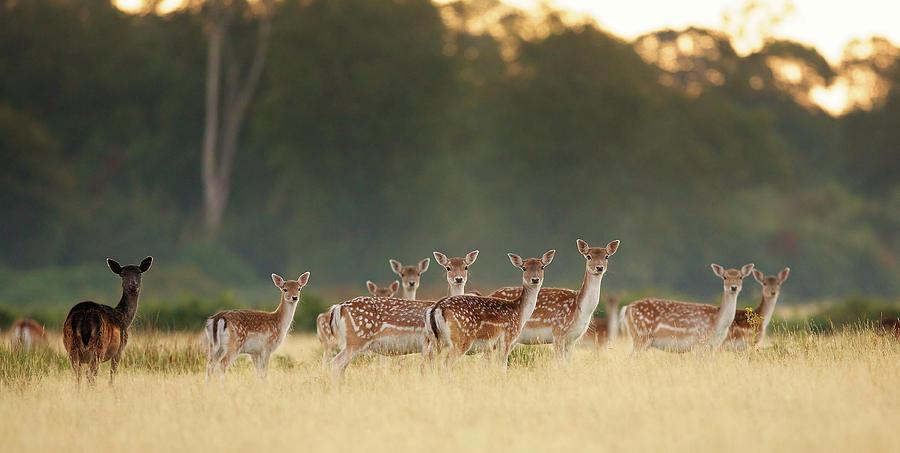 Group Of Deer By Markbridger