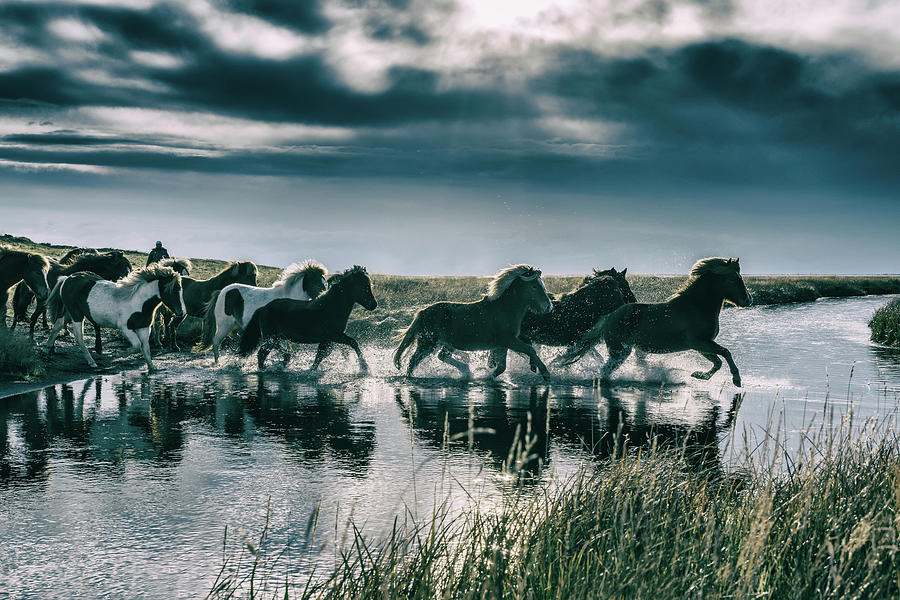 Group Of Horses Crossing A River Photograph by Arctic-images