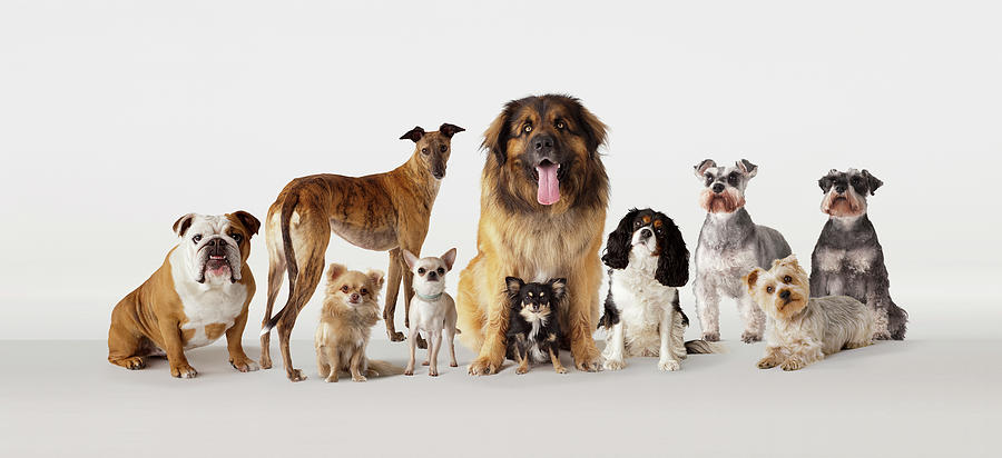 Group Portrait Of Dogs Photograph by Compassionate Eye Foundation/david Leahy