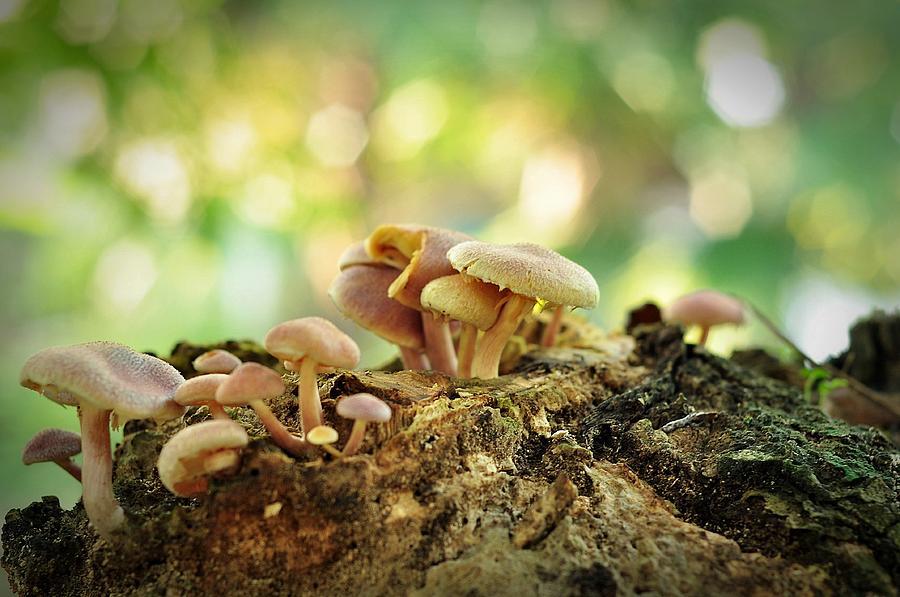 Mushroom Photograph - Grow by Achmad Bachtiar
