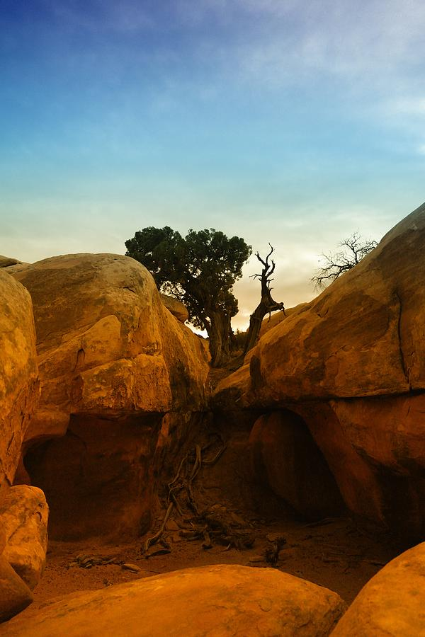 Trees Photograph - Growing Between The Rocks by Jeff Swan