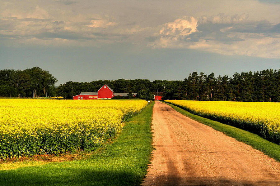 Canada Photograph - Growing For Gold by Larry Trupp