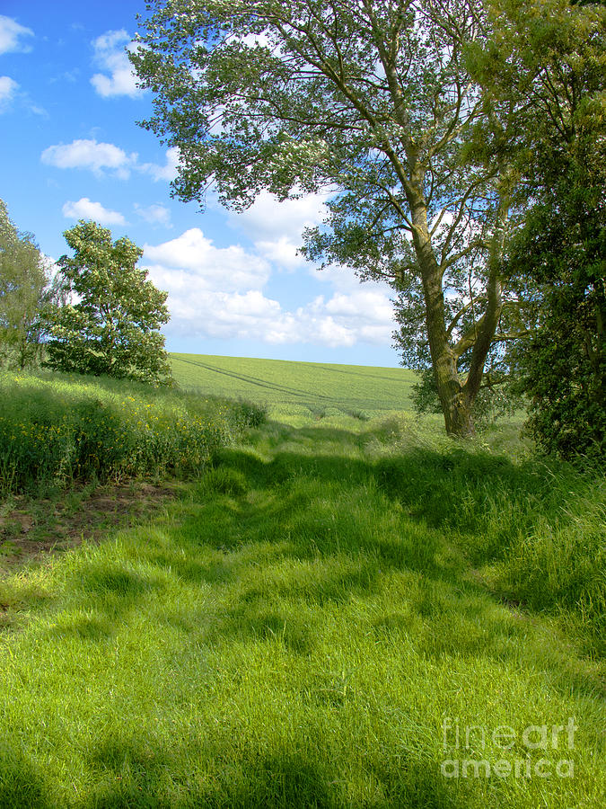 Farm Photograph - Growing Green by Ann Horn