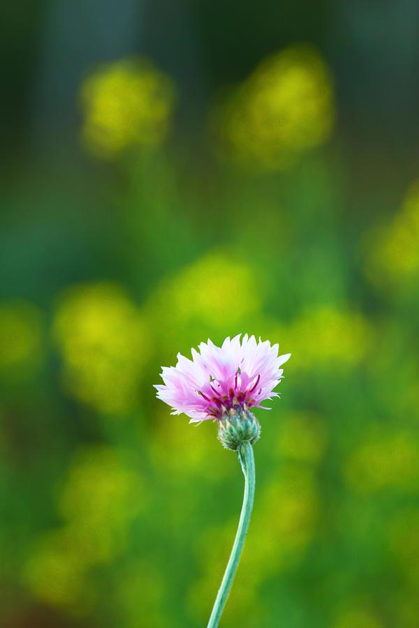 Yellow Photograph - Growing by Suradej Chuephanich