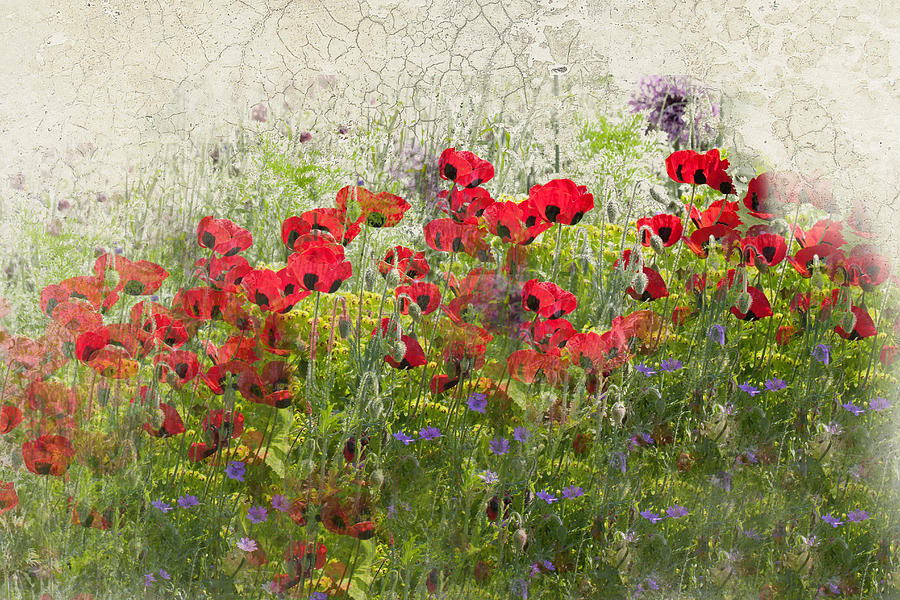 Poppies Photograph - Grunge Poppy Field by Lesley Rigg