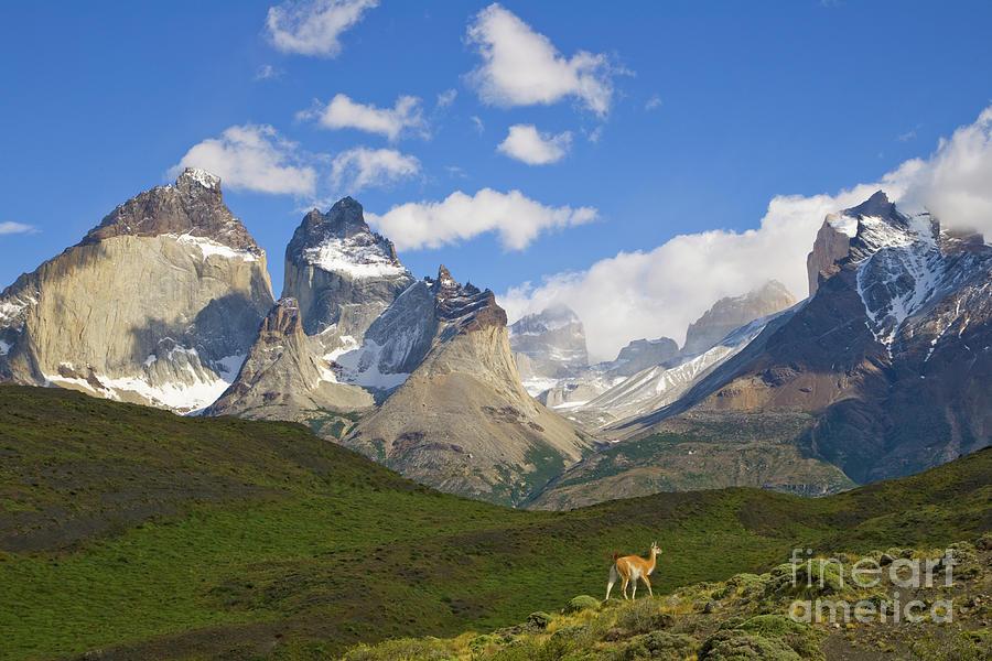 Guanaco And Cuernos Del Paine Peaks Photograph by Yva Momatiuk John Eastcott