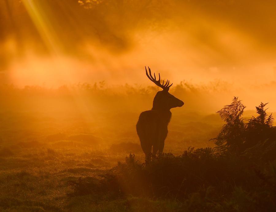Gold Photograph - Guard Of Light by Robert Fabrowski
